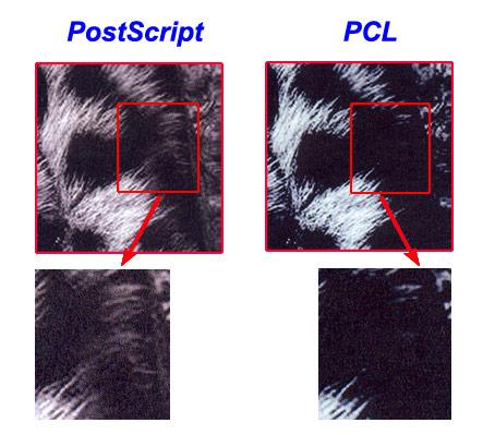 PCL và PostScript.